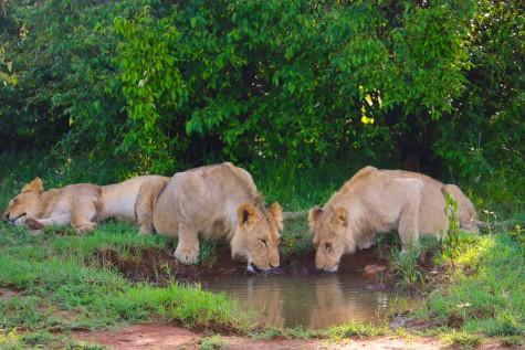 Maasai Mara, Best Kenyan Safari